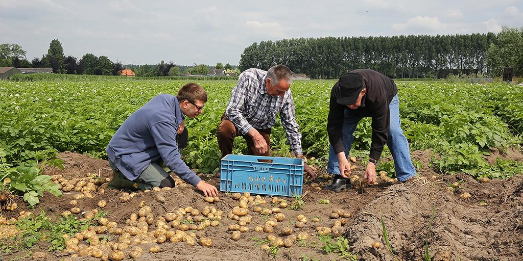 Samen buiten zijn en aardappels rooien