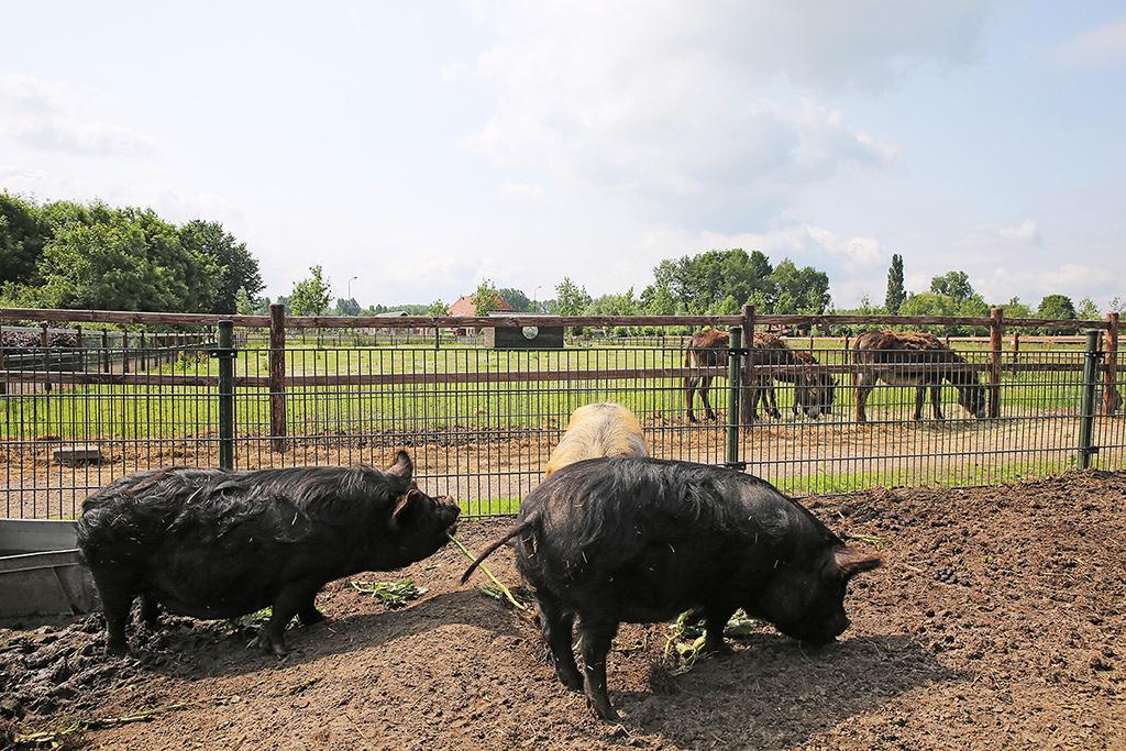 Dieren op de zorgboerderij